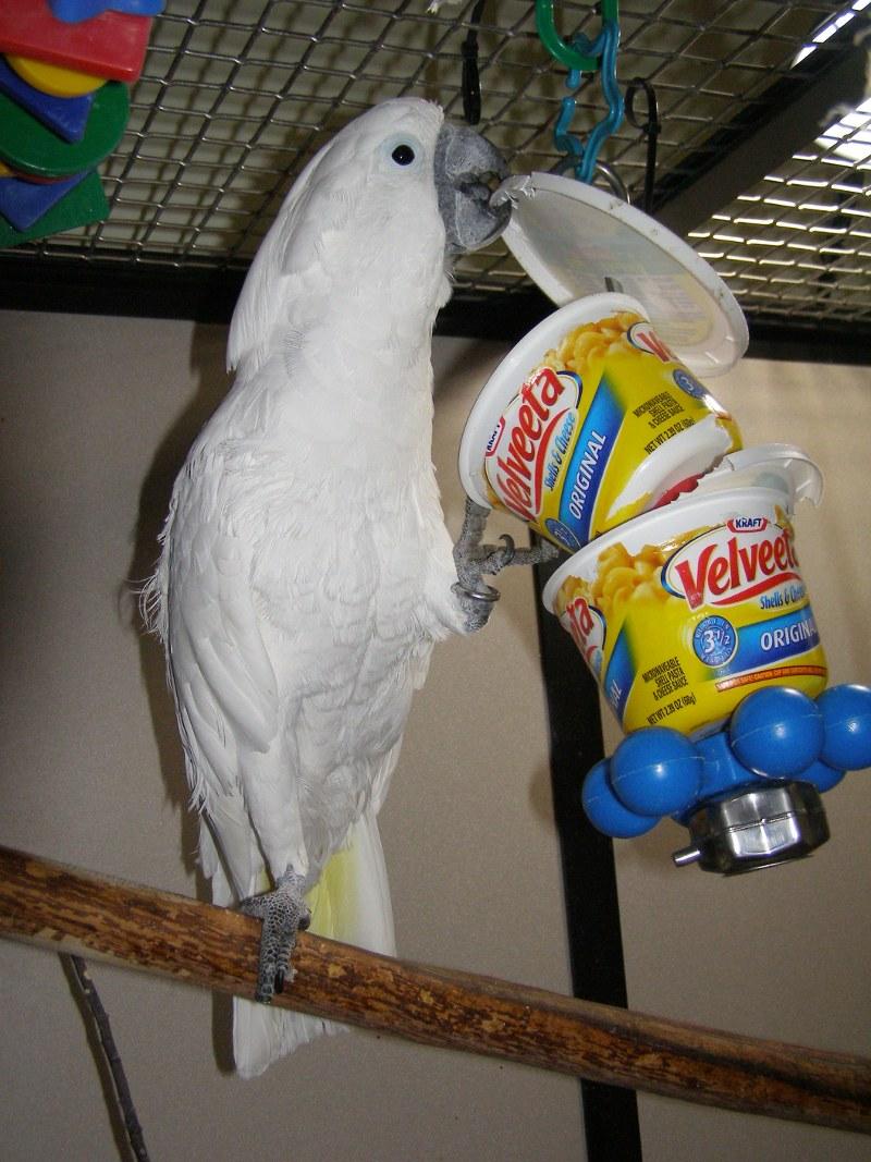Bird Enrichment Toys : Ideas for bird toys and enrichments